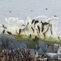 Đến lượt cả đàn cá đóng băng trên không trung vì quá lạnh