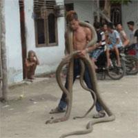Dị nhân liều mạng đùa nghịch với 2 con rắn hổ mang chúa