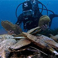 Địa Trung Hải: Ký sinh trùng đe dọa môi trường biển