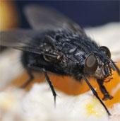Điểm chung giữa người, ruồi và giun