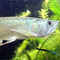 Điểm danh 10 loài cá có biệt tài săn mồi trên cạn trong thế giới tự nhiên