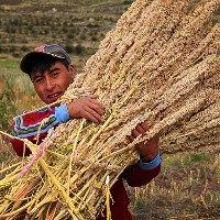 Diêm mạch sẽ là giải pháp cho an ninh lương thực toàn cầu