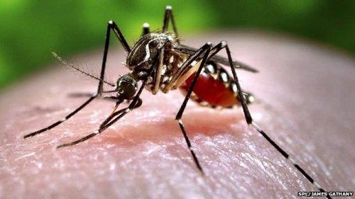 Diệt muỗi mang ký sinh trùng sốt rét bằng mùi hôi chân