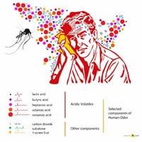Điều gì sẽ xảy ra nếu bạn có thể tàng hình trước lũ muỗi?