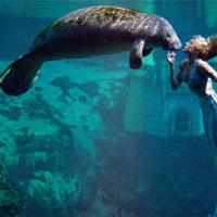Điều kinh ngạc về lợn biển
