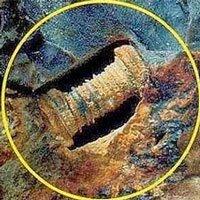 Đinh ốc 300 triệu năm tuổi hay sinh vật biển hóa thạch?