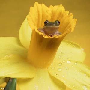 Độc đáo, ếch làm người mẫu