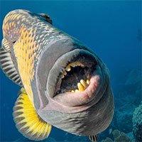 Đói ăn, cá sống dưới đại dương phải nhảy lên bờ để săn mồi