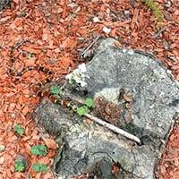 Đối đầu với loài rắn nguy hiểm bậc nhất Bắc Mỹ, rắn độc Copperhead cũng bị nuốt gọn không thương tiếc
