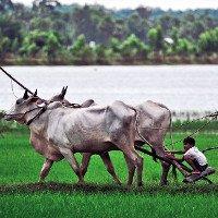 Đông Nam Á sẽ là khu vực chịu thiệt hại nặng nề nhất do biến đổi khí hậu