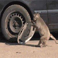Động vật càng thông minh càng thích chọc phá con người