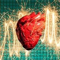 Động vật có bị đau tim không?