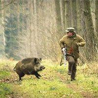 Động vật có trả thù giống như con người không?