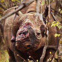 Động vật có xương sống trên toàn cầu đã giảm 60%