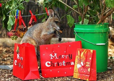 Động vật đón Giáng sinh