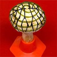 Đột phá nấm sinh học có thể thắp sáng ngôi nhà của bạn
