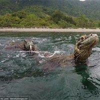 Du khách thoát hiểm trước rồng Komodo nhờ nhanh trí