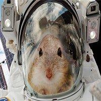 Đưa chuột vào vũ trụ để giúp chúng ta tìm hiểu về cách sống sót trên sao Hỏa