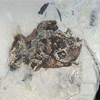 Đức: Phát hiện hóa thạch 3 triệu năm tuổi vẫn còn nguyên lông đỏ