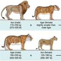 Dung hòa DNA sẽ cho phép hai động vật khác loài giao phối và sinh sản được với nhau