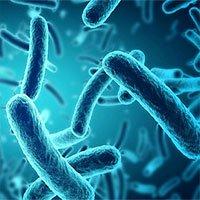 Dùng vi khuẩn gây tiêu chảy để phát triển