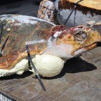 Dùng xác rùa chết cứu rùa sống