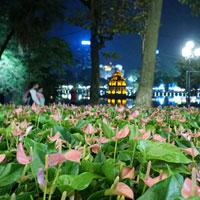 Đường phố Hà Nội tưng bừng đón tết Bính Thân