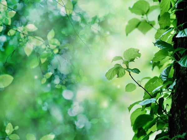 Gene điều khiển hoạt động các loài hoa