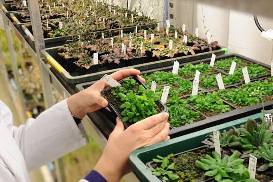 Gene điều khiển sự phát triển của cây trồng