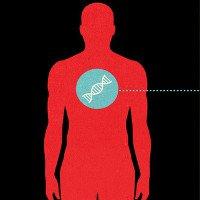 Ghép tinh hoàn dê sang người:Quá khứ và tương lai của cấy ghép dị chủng