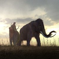 Giả thuyết sửng sốt, voi Mamút tuyệt chủng vì khát nước?
