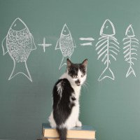 Giải mã bí ẩn: Có thực là mèo thích ăn cá?