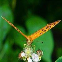 Giải mã bí ẩn về cú đập cánh của loài bướm
