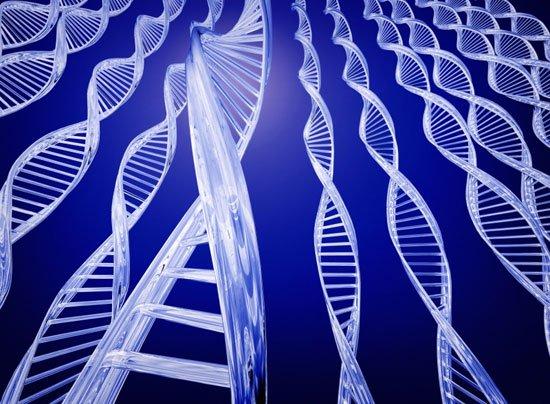 Giải mã gene người sống thọ nhất thế giới
