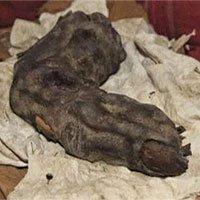 """Giật mình ngón tay """"khủng"""" có thật của người khổng lồ"""