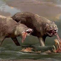 Giới nghiên cứu đã nhầm, Dire Wolves hoàn toàn không phải là sói