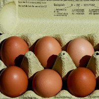 Hà Lan thu hồi nhiều triệu quả trứng gà nhiễm độc