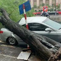 Hà Nội: Bão số 7 gây mưa lớn cả ngày, nhiều cây xanh bật gốc, đè bẹp
