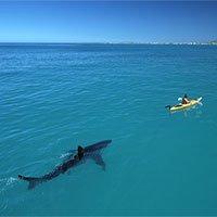 Hai du khách Úc hốt hoảng, thở gấp giữa biển vì bị cá mập trắng