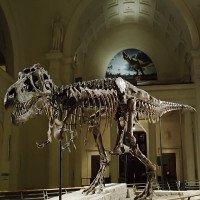 Hàm răng khủng long bạo chúa khiến giới khoa học bối rối