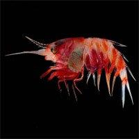 Hàng chục sinh vật lạ được tìm thấy ở Indonesia