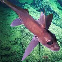 Hàng loạt loài mới được tìm thấy ở khu vực biển sâu ở Costa Rica