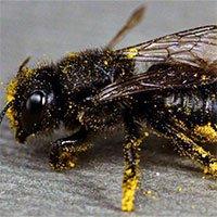 Hàng nghìn loài ong