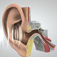 Hành trình đầy thú vị của âm thanh từ tai đến não bộ