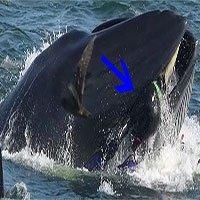 Hành trình lọt vào bụng cá voi rồi thoát ra an toàn của nhiếp ảnh gia Nam Phi
