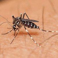 Hậu quả khi loài muỗi bị tuyệt chủng