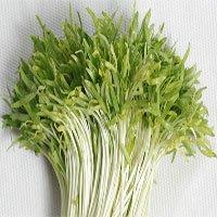 Hãy ăn rau mầm ngay từ hôm nay vì những tác dụng bất ngờ của nó