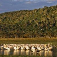 Hệ thống hồ trong thung lũng nứt vỡ lớn - Di sản thiên nhiên thế giới tại Kenya
