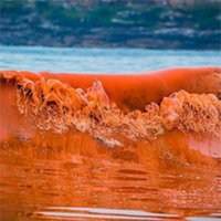 Hiện tượng thủy triều đỏ là gì?