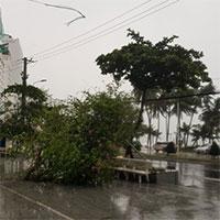 Hình ảnh bão số 12